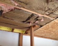 mice-infested-insulation-6